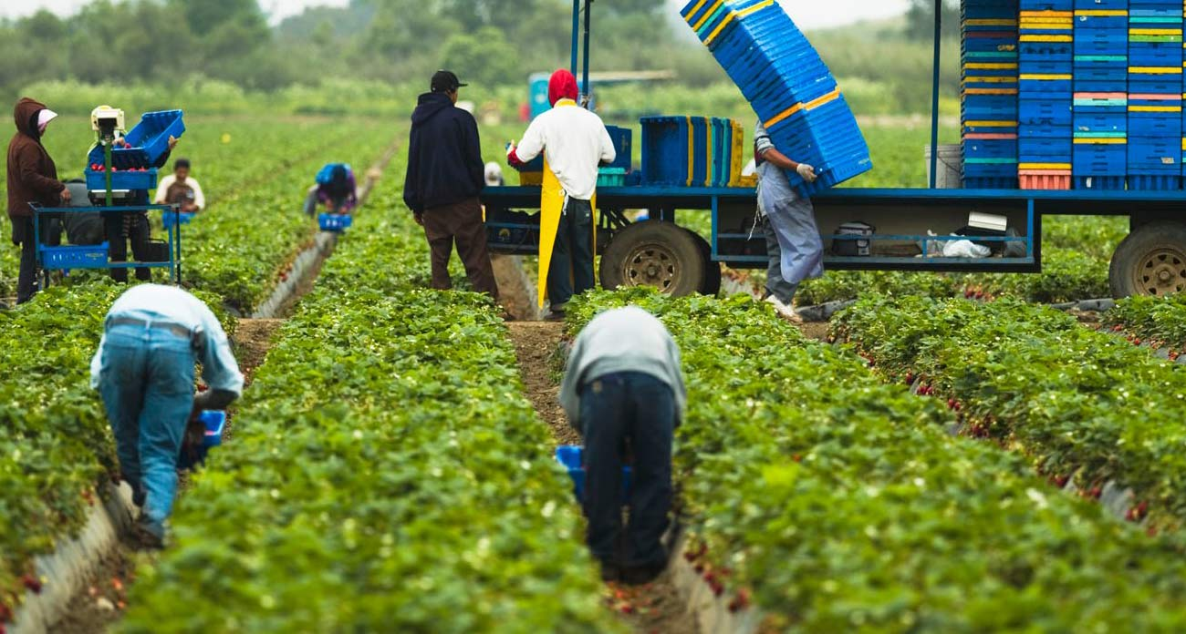 ecuadors economy oil and agriculture overdependence essay The economic growth that has occurred worldwide over the last 20 years has not decreased the poverty in many developing nations and the richest nations in the world still accommodate some of the poorest people.